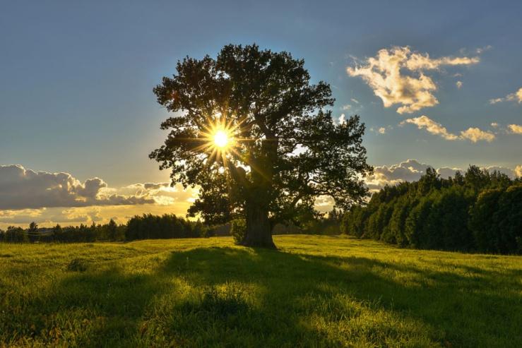 kosher tree.jpg
